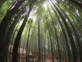 Kyoto Bambu path
