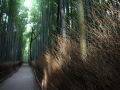 Bambu path 2
